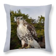 Hawk Throw Pillow by Luke Moore