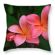 He Pua Laha Ole Hau Oli Hau Oli Oli Pua Melia Hae Maui Hawaii Tropical Plumeria Throw Pillow by Sharon Mau