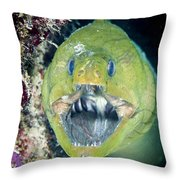 Hello There Throw Pillow by Jean Noren