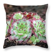 Hen And Chicks Throw Pillow by Tony Murtagh