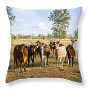 Herd Of Brahman Cattle In Outback Queensland Throw Pillow by Colin and Linda McKie