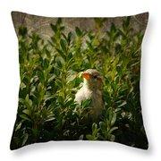 Hide And Seek Throw Pillow by Mariola Bitner