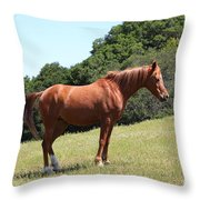 Horse Hill Mill Valley California 5D22683 Throw Pillow by Wingsdomain Art and Photography