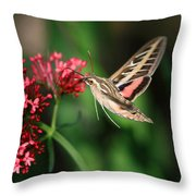 Hummingbird Moth Throw Pillow by Donna Kennedy