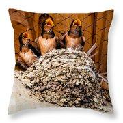 Hungry Baby Swallows - Antelope Island - Utah Throw Pillow by Gary Whitton