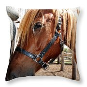 Im Resting My Head Throw Pillow by Todd and candice Dailey