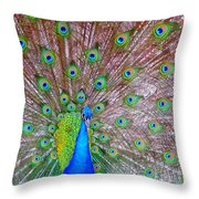 Indian Peacock Throw Pillow by Deena Stoddard