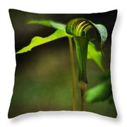 Jack-in-the-pulpit Throw Pillow by Rebecca Sherman