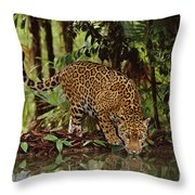 Jaguar Drinking Throw Pillow by Frans Lanting MINT Images