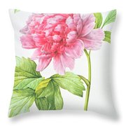 Japanese Tree Peony Throw Pillow by Pierre Joseph Redoute