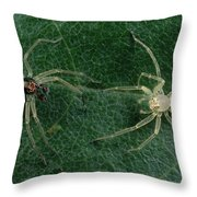 Jumping Spider Colorful Male And Pale Throw Pillow by Mark Moffett