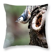 Just Hanging Around Throw Pillow by Kathy  White