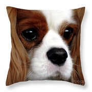 KC Throw Pillow by Kathleen Struckle