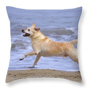 Labrador Cross Dog Running Throw Pillow by Geoff du Feu