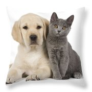 Labrador Puppy With Chartreux Kitten Throw Pillow by Jean-Michel Labat