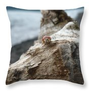 Lady Bug A Drift Throw Pillow by Nicki Bennett