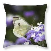Large White Pieris Brassicae  Throw Pillow by Eyal Bartov