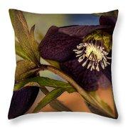 Lenten Rose Hellebore Floral Throw Pillow by Julie Palencia