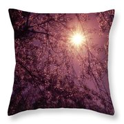 Light And Cherry Blossoms Throw Pillow by Vivienne Gucwa