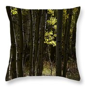 Light And  Shadows D0468 Throw Pillow by Wes and Dotty Weber