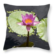 Lilly Lake Throw Pillow by Carey Chen