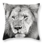 Lion King Throw Pillow by Adam Romanowicz