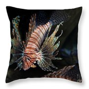 Lionfish 5d24143 Throw Pillow by Wingsdomain Art and Photography