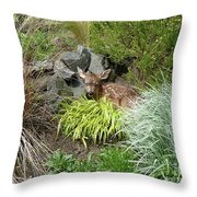 Little Lord Fawnleroy Throw Pillow by Lauren Leigh Hunter Fine Art Photography