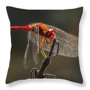 Little Red Dragon 2 Throw Pillow by Bill Caldwell -        ABeautifulSky Photography