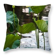 Lotuses In The Pond Throw Pillow by Jenny Rainbow