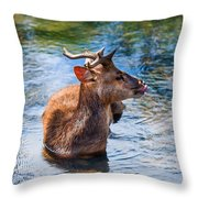 Lovely Time in Water.  Male Deer in the Pampelmousse Botanical Garden. Mauritius Throw Pillow by Jenny Rainbow