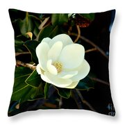 Magnolia Grandiflora Throw Pillow by Hanza Turgul