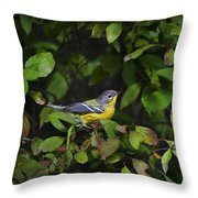 Magnolia Warbler Throw Pillow by Christina Rollo