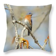 Male Bluebird In Budding Tree Throw Pillow by Robert Frederick