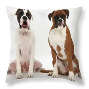 Male Boxer With Female Boxer Dog Throw Pillow by Mark Taylor