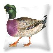 Mallard Throw Pillow by Anonymous