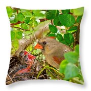 Mama Bird Throw Pillow by Frozen in Time Fine Art Photography