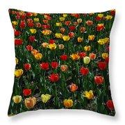 Many Tulips Throw Pillow by Raymond Salani III