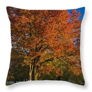Maple Trees Throw Pillow by Brian Jannsen