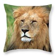 Masai Mara Lion Portrait    Throw Pillow by Aidan Moran