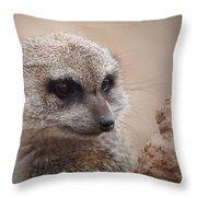 Meerkat 7 Throw Pillow by Ernie Echols
