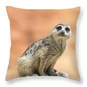 Meerkat Manor V3 Throw Pillow by Douglas Barnard