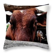 Mooo I See You Throw Pillow by Todd and candice Dailey