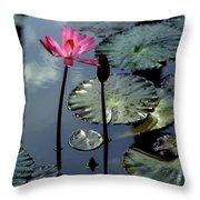 Morning Light Throw Pillow by Karen Wiles