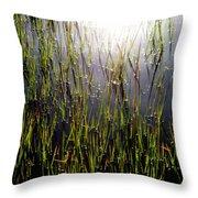 Morning Light Of God Throw Pillow by Karen Wiles