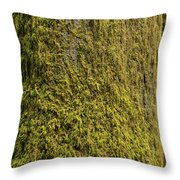 Moss Covered Tree Olympic National Park Throw Pillow by Steve Gadomski