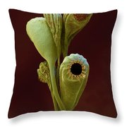 Moss Spore Capsules Throw Pillow by Eye of Science