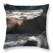 Mountain Lion Throw Pillow by John Telfer