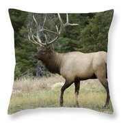Mr Majestic Throw Pillow by Bob Christopher
