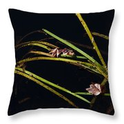 Nature Floats Throw Pillow by Karol Livote